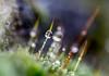 DSC_9317 (xav_roberts) Tags: macro closeup dew nikonv1 nikonft1 nikon sigma105mmf28mm water droplets morningdew rain raindrops