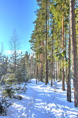 winter russian forest at sun day (mikhafff1984) Tags: winter sunny background beams beautiful blue branches cold december february forest frost frosted frosty horizontal idyllic january landscape light nature old outdoor park path russia russian scene scenery scenic season snow snowdrift sprawling sun sundown sunrise sunset tree wallpaper winterbackground winterforest winterlandscape winterlandscapeforest winterlandscapes winteroutdoors winterscene wintersnow wintertree wintertrees wonderland