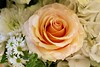Rose for Dad (Read2me) Tags: flower rose bouquet arrangement cut pree she cye challengeclubewinner thechallengefactory