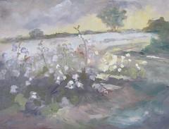 Boston Cotton Fields