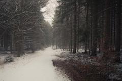 Wintertime (Netsrak) Tags: atmosphäre baum bäume eifel februar forst landschaft natur nebel schnebel schnee stimmung wald atmosphere fog forest landscape mist mood nature snow tree trees woods meckenheim nordrheinwestfalen deutschland de