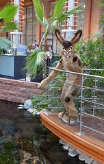Nordic Fuzzcon 2017 396 (finbarzapek / SeanC) Tags: nordic fuzzcon nfc fuzz con 2017 nfc2017 furry convention fursuit fursuits animal costumes scandic infra city stockholm sweden