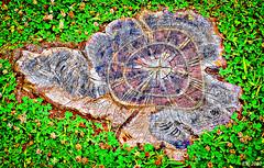 Imprint Of Time (Russian:  ) (Eduard Karlov) Tags: trees stilllife williamsburg hdr clocks stumps