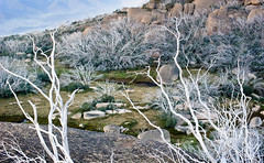 Ghostly gums (laurie.g.w) Tags: park light mountain landscape buffalo afternoon mt shadows bright plateau rocky australia victoria hills highland alpine national deadtrees