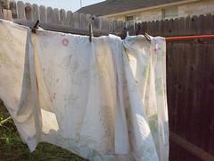 P8292911.jpg (mcreedonmcvean) Tags: clotheslines ourbackyard lastlight aroundthehouse 20150831