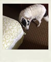 IMG_3341 (callmar2013) Tags: utah ut i70 dogpoop mountainmeadows richfeild
