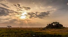 DSC_3129 (Jorge kaplan) Tags: nikon nikkor d750 28300mm africa safari tanzania serengeti nationalpark park paisaje landscape