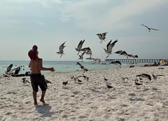 panama city beach florida (65mb) Tags: vacation beaches floridavacation sunshinestate floridabeaches vacationinflorida panamacitybeachflorida visitflorida 65mb placestoseeinflorida