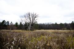 Minnesota vistas (GSankary) Tags: fall farm farms ruralscenes farmscenes