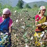 オーガニックコットン栽培・製品販売による循環型プロジェクトの写真