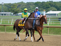 "2015-08-23 (48) r2 Tyler Conner on #4 Breezy Girl (JLeeFleenor) Tags: photos photography md marylandhorseracing laurelpark jockey جُوكِي ""赛马骑师"" jinete ""競馬騎手"" dżokej jocheu คนขี่ม้าแข่ง jóquei žokej kilparatsastaja rennreiter fantino ""경마 기수"" жокей jokey người horses thoroughbreds equine equestrian cheval cavalo cavallo cavall caballo pferd paard perd hevonen hest hestur cal kon konj beygir capall ceffyl cuddy yarraman faras alogo soos kuda uma pfeerd koin حصان кон 马 häst άλογο סוס घोड़ा 馬 koń лошадь outside maryland"