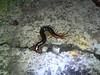 Centipede (luisjromero) Tags: insect finepix fujifilm centipede cienpies s2980