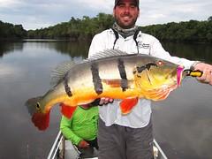 Amazonia 2012 (29)
