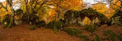Arco Arno Otoño (Alfredo.Ruiz) Tags: canon bosque otoño arno arco hayedo polarizador ef1740 entzia eos6d