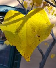 Hearts in Santa Fe