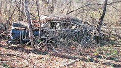 OVER GROWN 1954 CHEVY SEDAN (richie 59) Tags: auto autumn trees usa ny newyork fall chevrolet abandoned broken overgrown car america sedan us weeds rust automobile gm unitedstates weekend rusty saturday faded chevy chrome rusted abandonedhouse vehicle rusting newyorkstate nys rustycar bluecar wornout nystate rustycars rustyoldcars rustyoldcar generalmotors hudsonvalley americancar 2015 rustedout fadedpaint ulstercounty abandonedcars motorvehicle 4door midhudsonvalley 1950scar fourdoor midhudson ulstercountyny 4doorsedan rustychevy fourdoorsedan gmcar 1954chevy americansedan chevysedan 2010s oldsedan townoflloyd richie59 townoflloydny nov2015 1954chevysedan nov212015 rustychevys