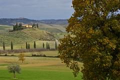 Trees. Autumn in Val d'Orcia (Antonio Cinotti ) Tags: italy landscape nikon italia hills tuscany cypress siena pienza toscana valdorcia cypresses paesaggio colline cipressi sanquiricodorcia campagnatoscana d7100 nikon1685 valdorcia nikond7100