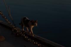 catwalk-31712 (enesmi) Tags: family familia cat canon outdoor kitty gato 5d katze sonne dier zon haustier catwalk kedi tier ktzchen hayvan katje 5dmarkiii