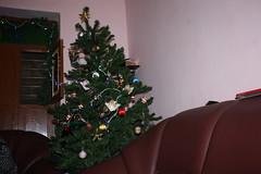 IMG_4598 (SorenDavidsen) Tags: hans mithra tirupati juletr