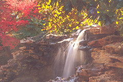 Waterfall Japanese Gardens (mickeyboy2008) Tags: flowers autumn fall nature garden landscape japanese waterfall scenery texas fort scenic serenity worth botanicalgardens