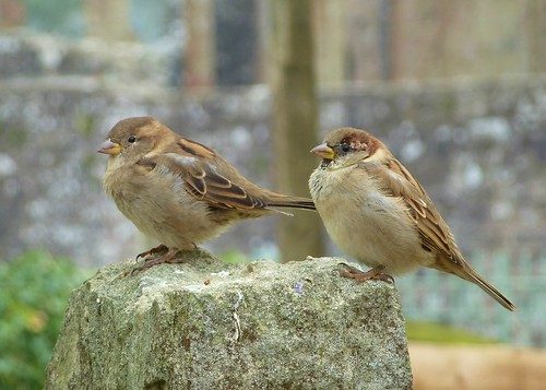 Mr. & Mrs. Sparrow Visit Tintern Abbey