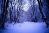 IMG_7871 (Une fille) Tags: canon d 6d tamron outdoor woods forest snow medieval trees snowflake sky blue mist walk alone landscape melancholy dream dreamy grivegnée chartreuse bois oblats parc belgique belgie luik liege