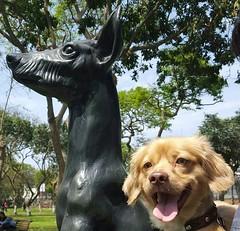 Lima - Campo de Marte (Santiago Stucchi Portocarrero) Tags: jesúsmaría lima perú santiagostucchiportocarrero parque can cane chien hound dog roni hund perro