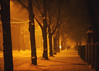 Eternity (Niks Freimanis) Tags: winter eternity ziema snow frost frozen riga latvia latvija baltic canon 85mm 18 usm orange christmas city cold light tungsten trees street