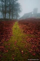 """(...) half a man walks with no shadow (...)"" (Ricardo Bentes) Tags: bradgate park leaves grass green red fog tower winter seasons fuji xm1 samyang"