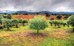 Carrascalejo, Cáceres [HDR] (fersantiz) Tags: carrascalejo cáceres olivo cielo montaña paisaje panorámica hdr árbol campo nubes niebla