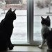 Ares and Artemis watching the Snow Fall
