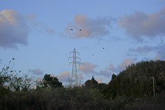 Crow that returns to the nest (mokuu) Tags: crow カラス cloud 雲 steeltower 鉄塔 evening dusk 夕暮れ 黄昏