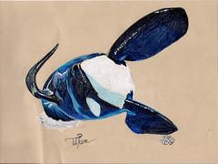 tilikum (neku.chou) Tags: draw tilikum orque orca killerwhale killerswhales seaworld shamu saut sea show mer mammal parc dessinsréalistes dessin realistic polychromos