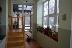 2017_Január_7077 (emzepe) Tags: 2017 január tél hódmezővásárhely bercsényi utca 37 otthon nálunk előszoba folyosó veranda lépcső terasz winter our home hó havas télikert növények plant növény szobanövény cserepes virág üvegezett hallway corridor ablak window large polgári ház kertes nagy tágas stairs fa falépcső patio garden