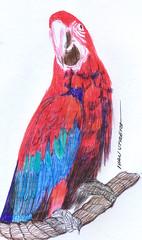 guacamaya a lapicero (ivanutrera) Tags: guacamaya draw dibujo drawing dibujoalapicero boligrafo animal bird ave sketch sketching pajaro lapicero pen dibujoaboligrafo