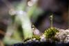 Muschio e rugiada (Paolotac) Tags: nature macro rugiada dew water drops droplets moss muschio allaperto light luce dettagli details bokeh canon