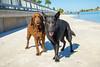 IMG_2007 (megscapturedtreasures) Tags: ammo sun sunset dog beach dogs ruff days daycare
