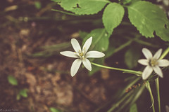 Flowers (I Love Canon <3) Tags: flower flowers macro bokeh green lightroom grass nautre outdoor canoneos50d ef35f14lusm