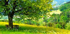 Relaxing!   E-M5 MII  Panorama (Swiss.piton (B H & S C)) Tags: panorama tree green tourism relaxing ostschweiz panoramic grn baum toggenburg m43 zd myswitzerland panoramastitching awesometrees panoramaschweiz ilovemym43 bigsmall microfourthirdsphotography olympusdigitalcameraomdem5ii panorama2x1 olympusdigitalcameraomdem5iimzd75mmf18 imageswithimpact
