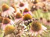 Field of flowers (David Cucalón) Tags: flowers naturaleza blur flores macro nature soft bokeh desenfoque suave fineartphotography 2015 cucalon davidcucalon