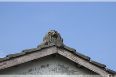 IMG_1288 (asun5) Tags: lion photograph farmer     shandraw
