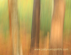 Dragged Trees (justyourcofchi) Tags: wood trees nature forest woodland painting outdoors countryside woods shutterdragging chiarnold justyourcupofchi