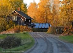 20151019085375 (koppomcolors) Tags: sweden sverige scandinavia värmland varmland koppom järnskog koppomcolors