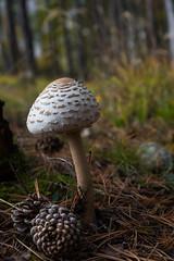 NIK_0293-1 (Samimages) Tags: nature automne pussy savoie saison