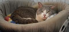 Trudy (.Vale.) Tags: cats baby animals cat kitten feline kitty kittens gatto gatti rifugio micio micia gattino gatta catshelter gattini micini