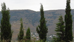 tall trees above a valley village IMG_8073 (mygreecetravelblog) Tags: trees village greece valley greekislands andros cyclades cycladesislands androsgreece androsisland korthi korthiou ormoskorthiou ormoskorthiouandros korthivillageandros korthiouandros