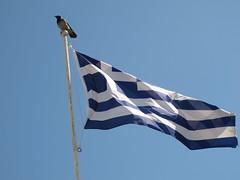 Greece (JohnnyDalmas) Tags: bird flag wildlife greece rhodes mandraki rhodos