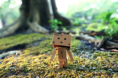 danbo under the tree (Andy-Hsieh) Tags: light colors zeiss mood moody none distagon danbo 文字 a99 景深 danboard 背景虛化 24za
