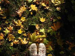 selfie (3OPAHA) Tags: autumn shadow sun leaves canon gold shoes herbst selfie
