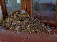 Birds Nest on Old Window Sill (johnandmary.F) Tags: ocalafl silverspringsstatepark artisansprings